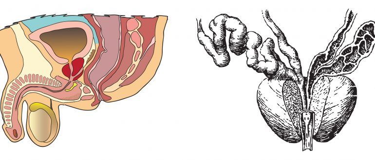 Выделения из мочеиспускательного канала (уретры) у женщин и мужчин