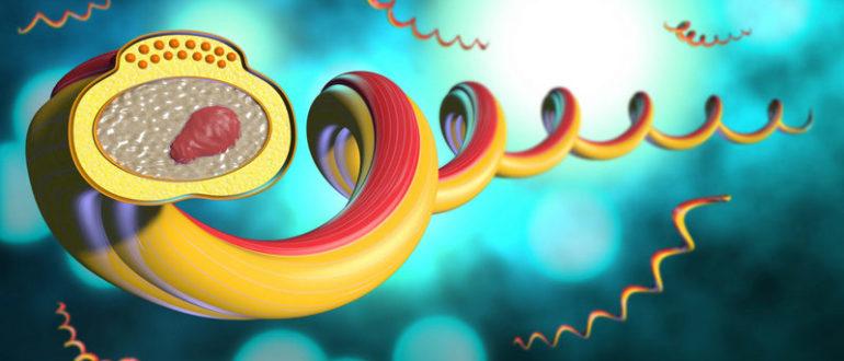 бытовой сифилис
