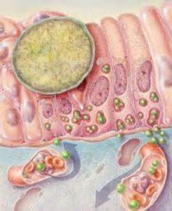 Сумамед при хламидиозе: насколько эффективен препарат в борьбе с хламидиями